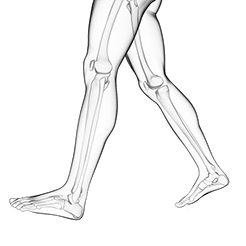 Beine mit Bewegungsapparat für Laufanalyse
