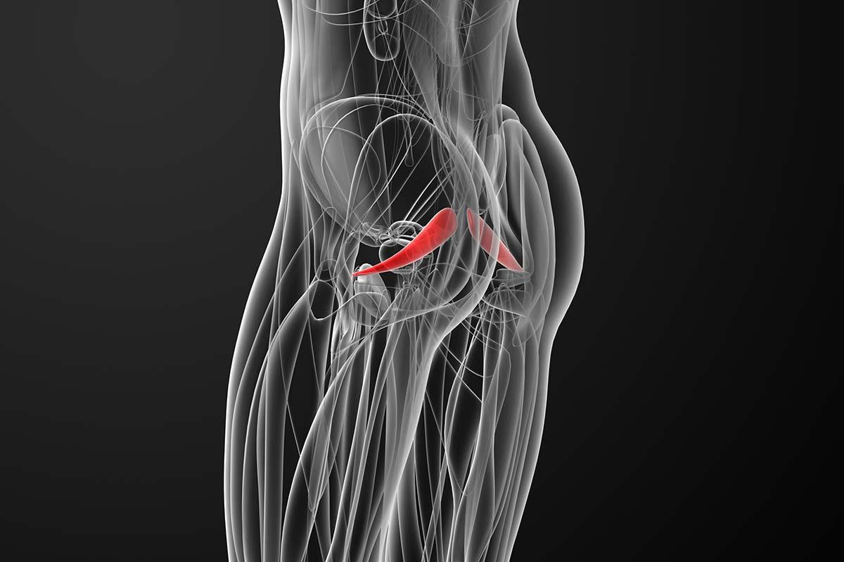 Anatomie des Piriformis-Muskels